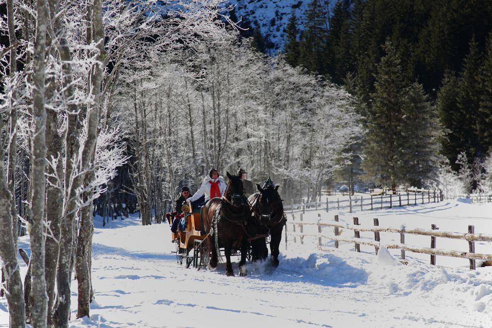 pferdeschlittenfahrten_in_grossarl, Großarl